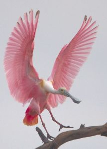 Pink bird flying